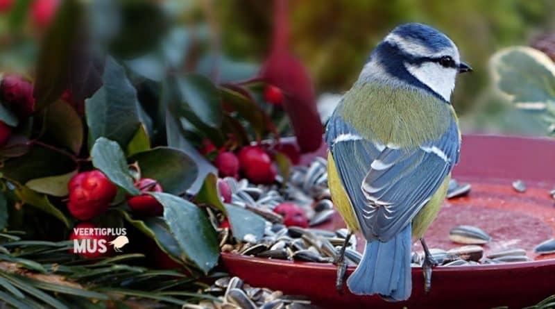 wanneer tuinvogels vogels in tuin bijvoeren