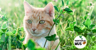 4 bijzondere eigenschappen van katten die jou gelukkiger maken