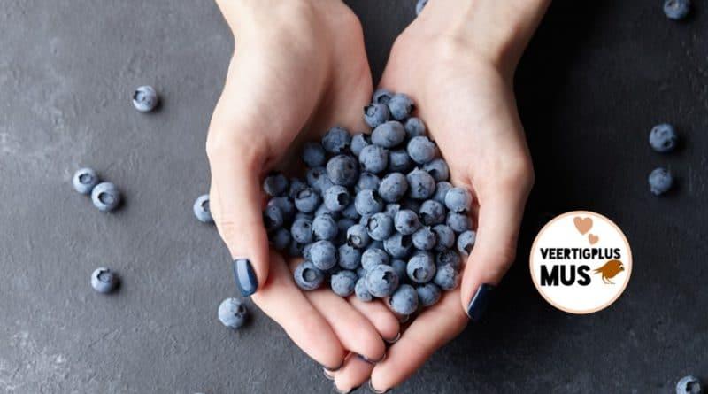 7 redenen waarom elke dag blauwe bessen eten goed voor je is