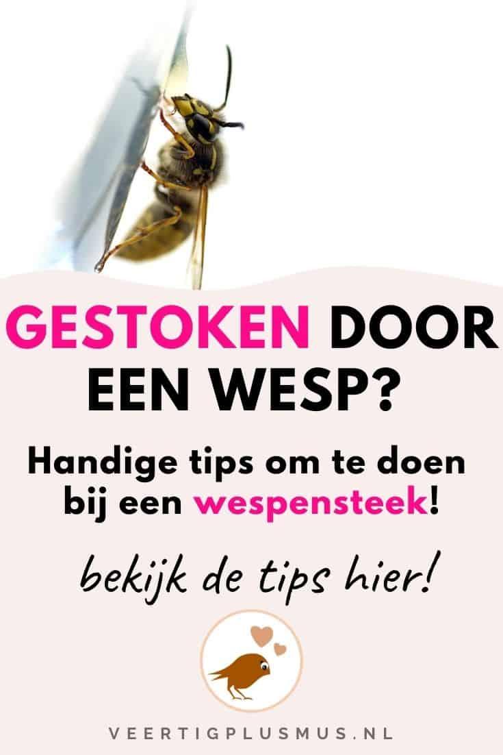 Gestoken door een wesp, lees deze tips bij een wespensteek