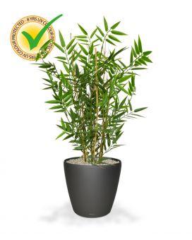 Japanse bamboe kunstplant maxifleur